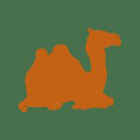 camel 04
